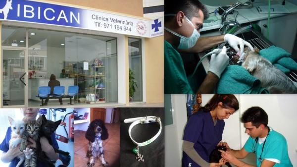 Clinica Veterinària IBICAN Calle Canàrias,  41 (Rotonda Can Misses) 07800   Ibiza (Eivissa)                     Telf.  (+34)  971 194 644   Clínica veterinaria que cuenta con el mejor equipamiento