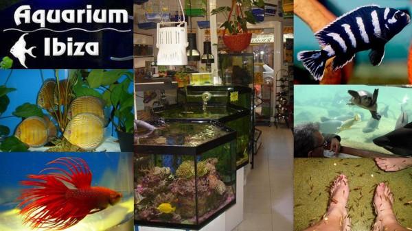 AQUARIUM IBIZA    Calle José Riquer Llobet,  8 07800  Ibiza (Eivissa)                     Telf.  (+34)  971 39 11 09   Fue en 1989 cuando se abrió la tienda acuarió dedicada con especial atención al